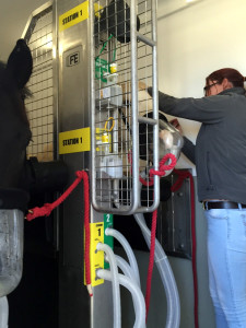 Horses fitted with Oxygen Masks inside the Mobile Equine Hyperbaric Therapy (MEHOT) chamber